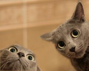 43-SS-cat-peekaboo-חתולים-מציצים