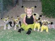 166-bee-costume-תחפושת-דבורה