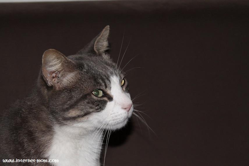 1134-my-cat-החתול שלי