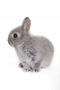 1343-SS-bunny