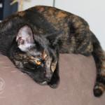 3006-cat-חתול