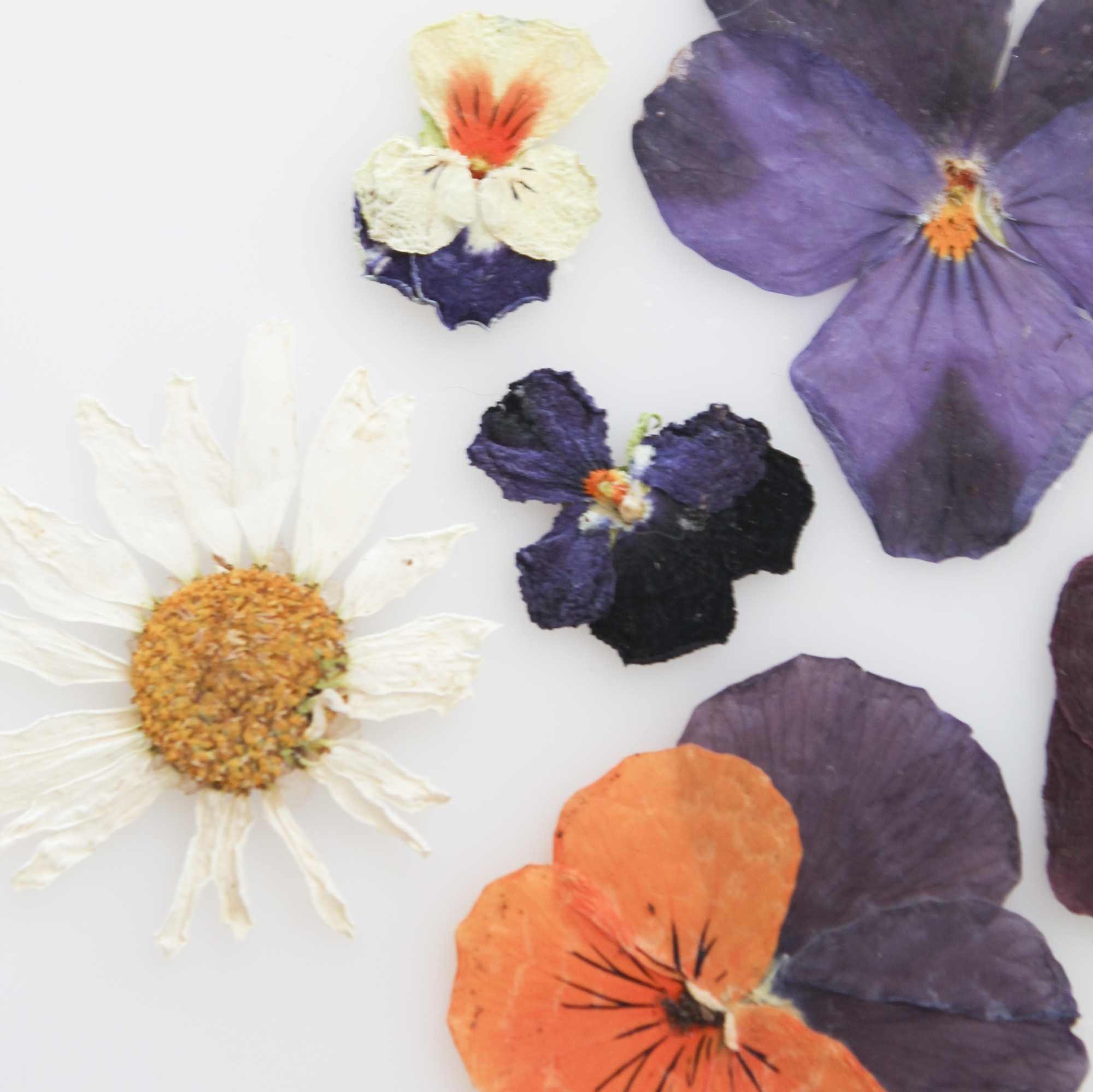 יצירות פרחים (ספר וערכה)