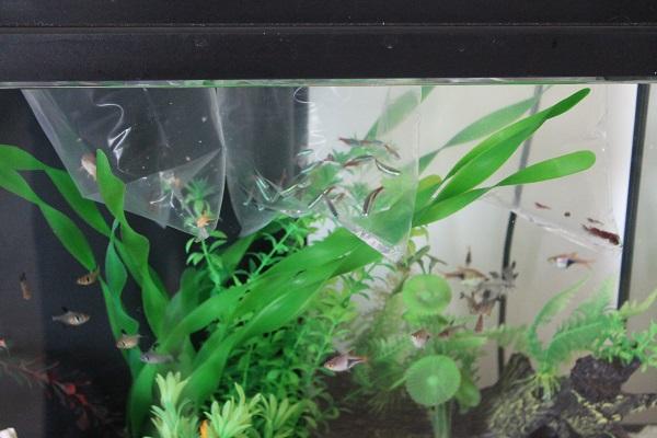 3286-fish-tank-אקווריום-ילדים