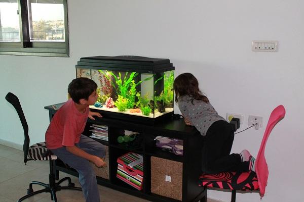 3287-fish-tank-אקווריום-ילדים