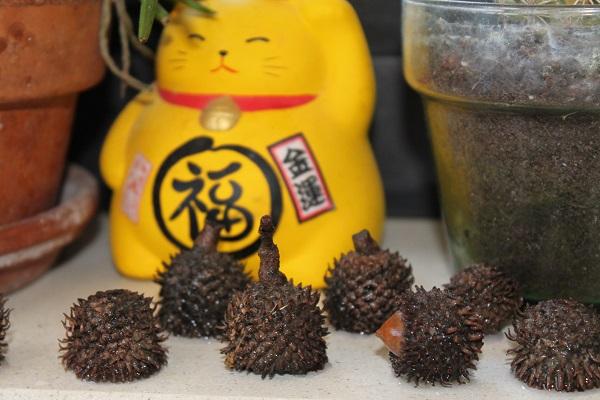 3369-felted-acorns-בלוטי-צמר