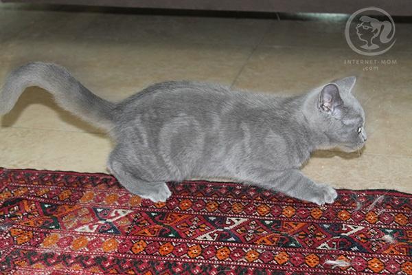 3390-loui-cat-חתול-לואי