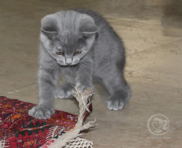 3391-loui-cat-חתול-לואי