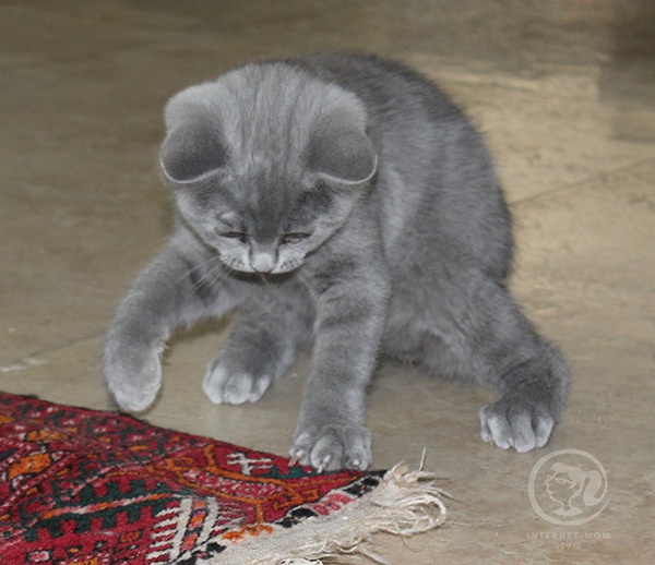 3392-loui-cat-חתול-לואי