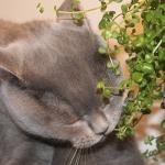 חתול השכמות וחתולת נמנומים