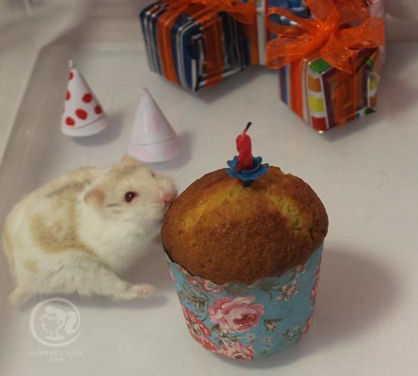 3839-hamster-birthday-אוגרים-יום-הולדת
