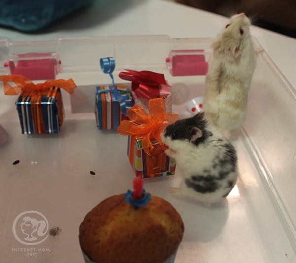 3845-hamster-birthday-אוגרים-יום-הולדת