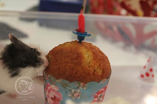 3846-hamster-birthday-אוגרים-יום-הולדת