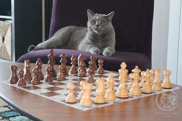 שולחן שחמט DIY
