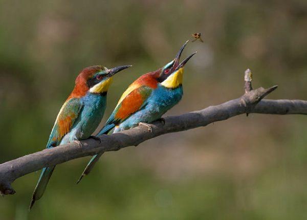 מתקני האכלה לציפורים DIY