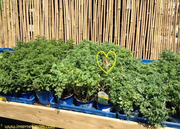 איך מגדלים פרפר