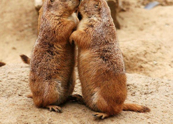 נשיקות לחג האהבה