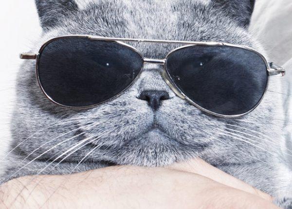 8 הוכחות שחתולים שולטים
